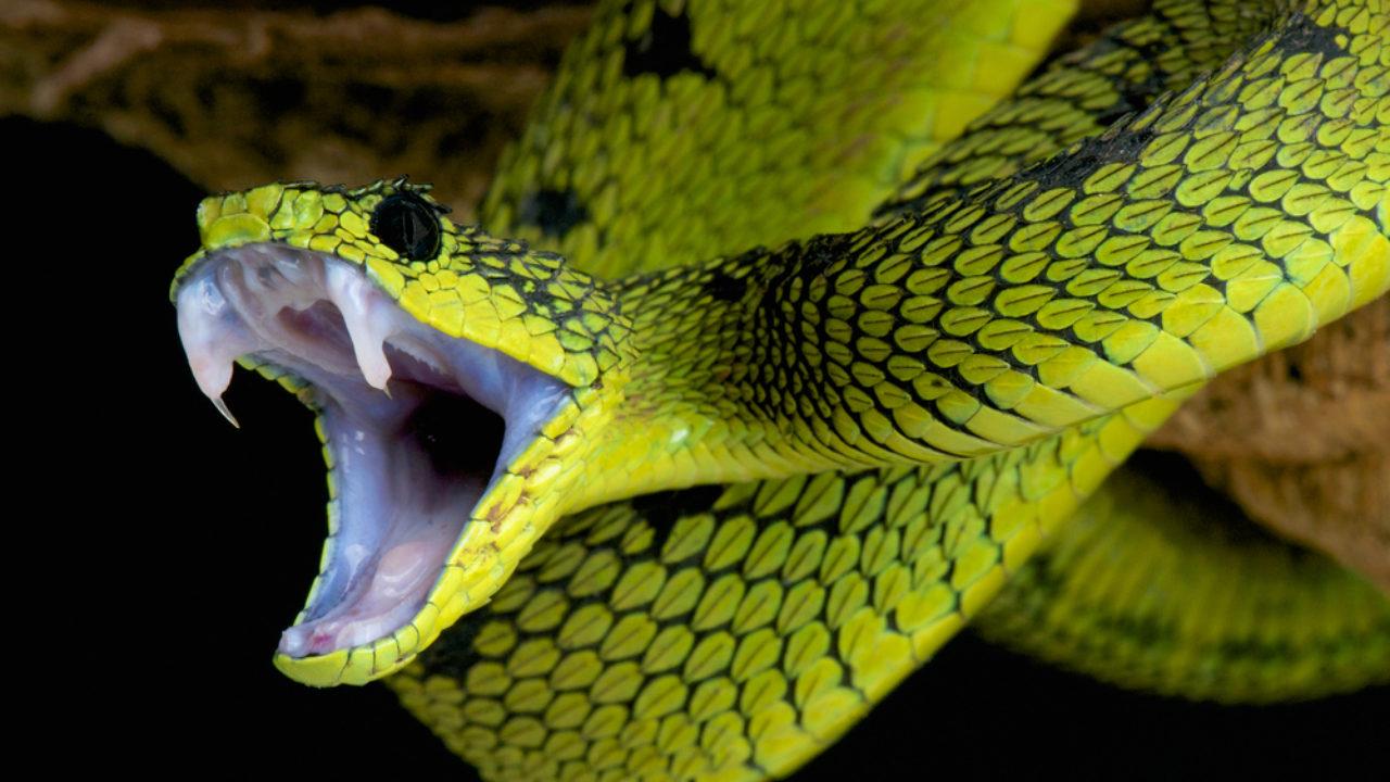 Snake Bite Dreams Healing Elixir Or Deadly Poison