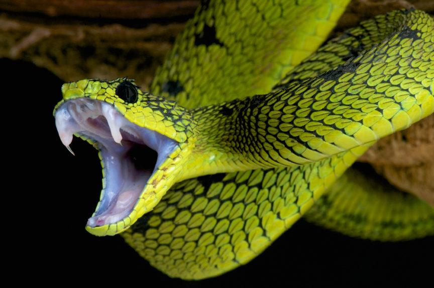 Snake Bite Dreams Healing Elixor Or Deadly Poison